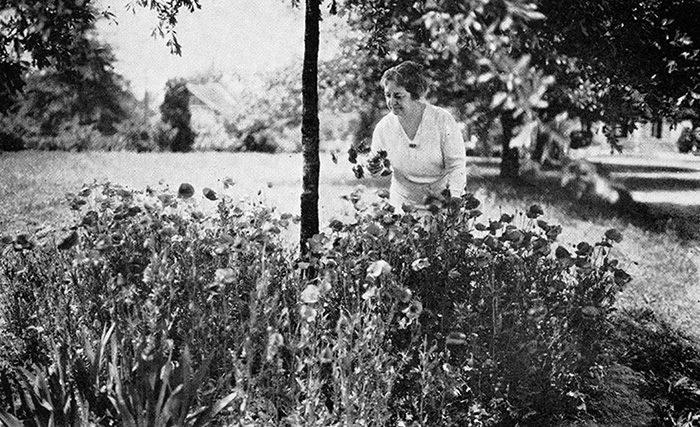 Moina Michael gardening in her poppies