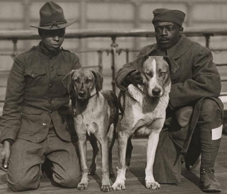Soldiers with Dogs