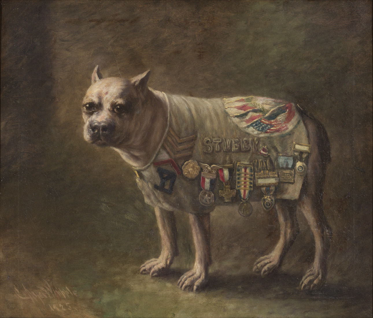 Stubby's portrait in the New Haven Veterans Museum