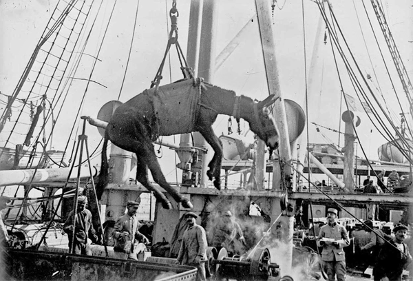 Brit unloading a mule in Alexandria Egypt 1915
