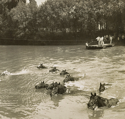 French cavalry horses swimming stream