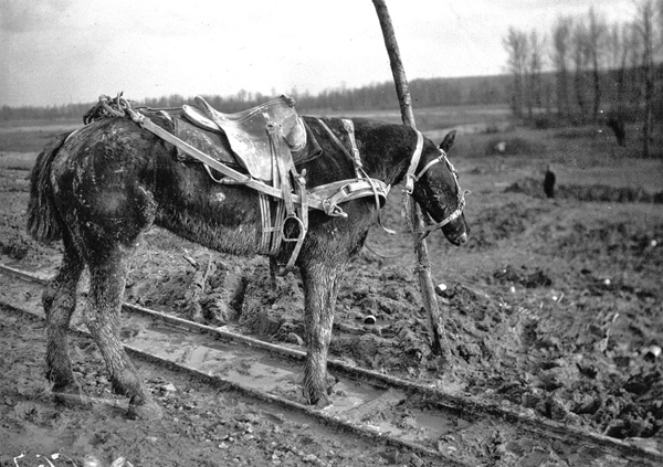 French draft saddle horse tied to pole on RR track Bibliotheque nationale de france
