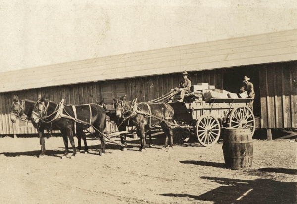 US mules with supply wagon wwimus