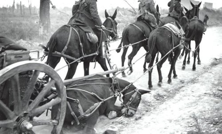 US team with fallen mule in snow