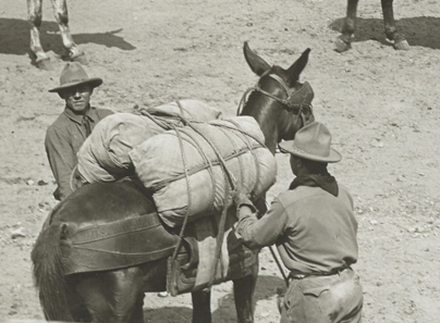 mule with diamond hitch pack