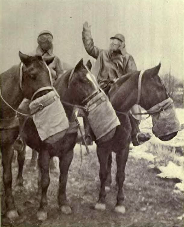 US horse gas mask no bridles