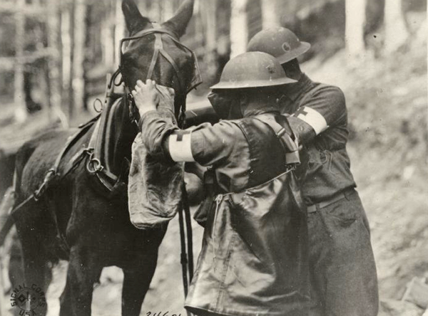 US mule with gas mask Alsace Germany Aug. 31 1918