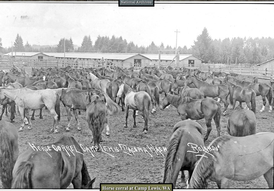 horse corral at Camp Lewis WA
