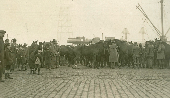 US horses on dock at Bordeaux qmmus