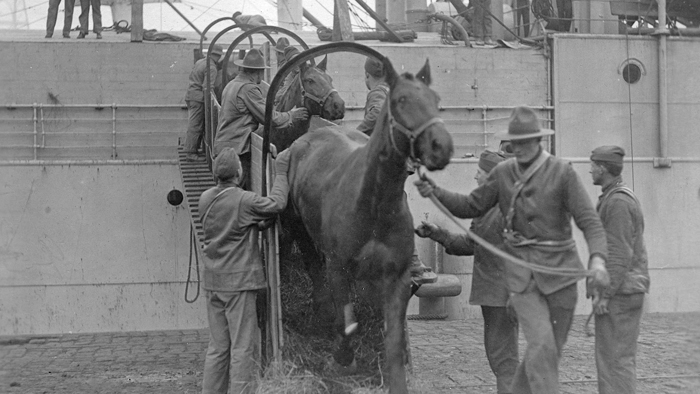 US horses unloading from ship at St. Nazaire qmmus