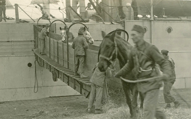 US horses unloading from ship in France qmmus