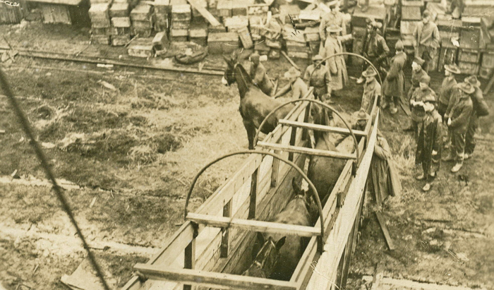 US mules leaving ship in France qmmus