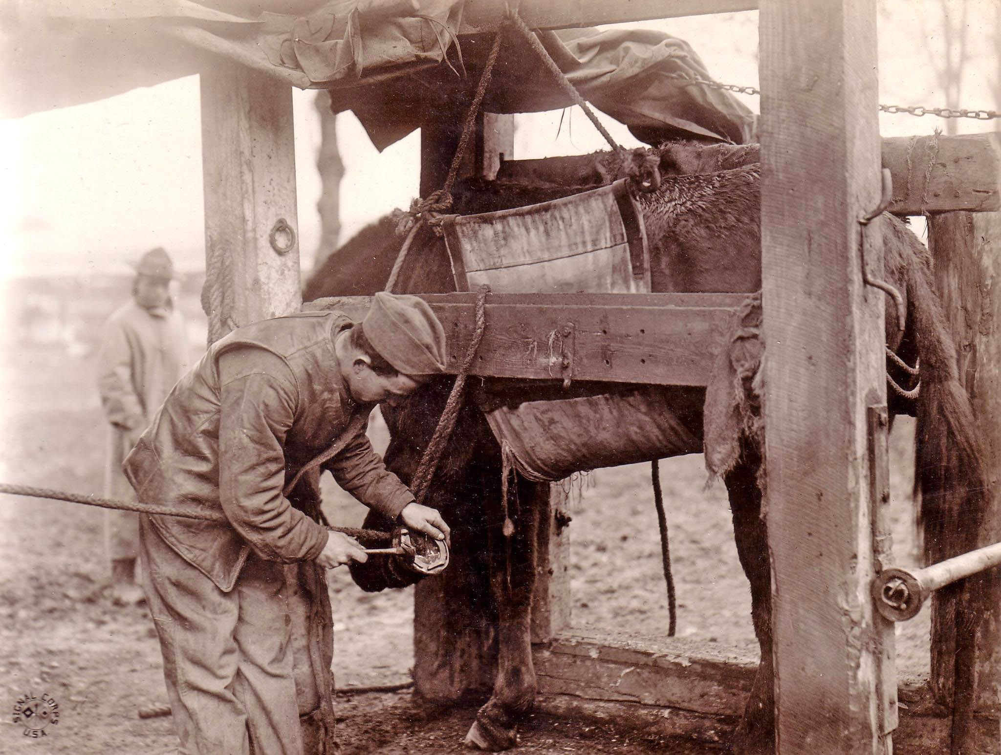 preparing to shoe a reluctant mule before discharge
