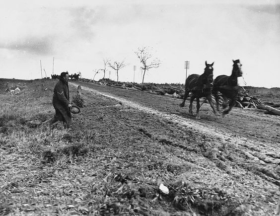 British transport horses bolting La Boisselle 1916