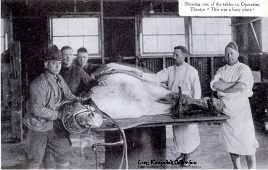GK Operating room at Veterinary Hospital No 9 France