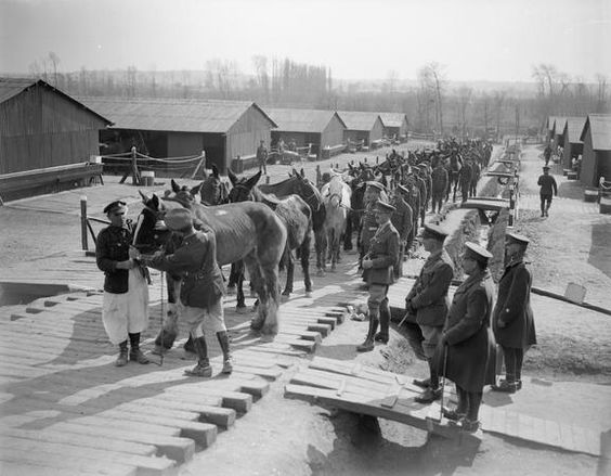 Wounded horses arriving at No. 5 Veterinary Hospital at Abbeville 22 April 1918
