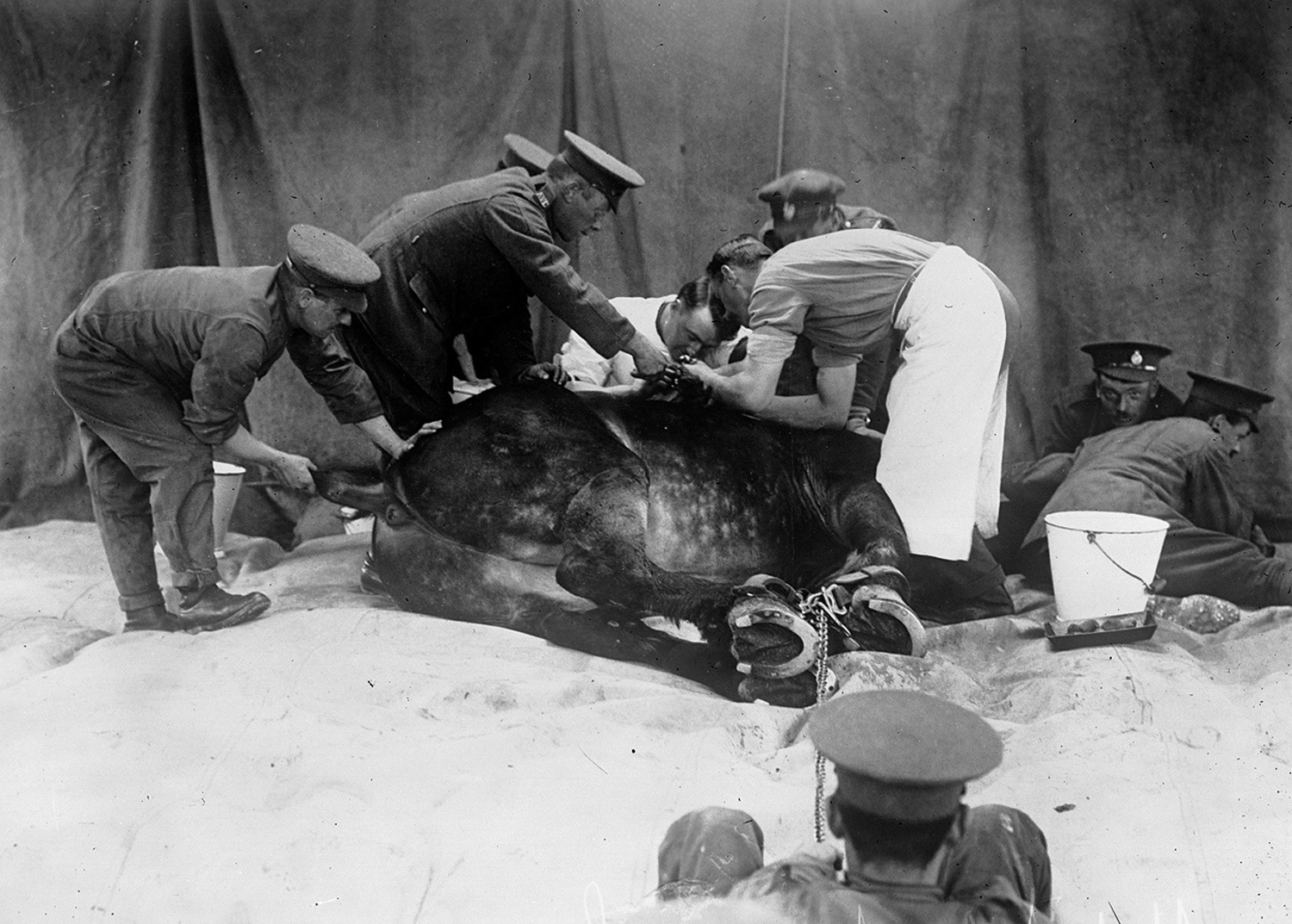 horse being operated on bn de france 1916