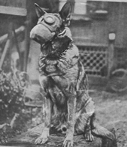 German Shepherd in Gas Mask WWI