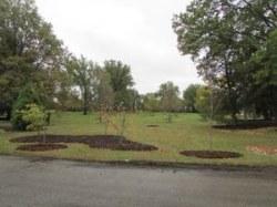World War I Memorial Grove