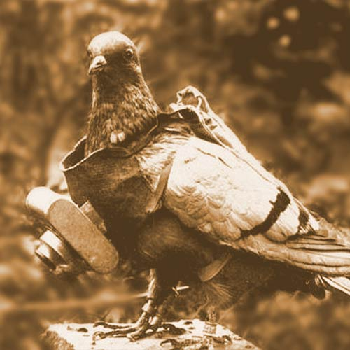 German Avian Intelligence - Pigeons started to go high tech in WWI
