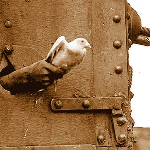 Homing pigeon launching from tank